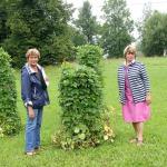 Pavasarī stādītās kāršu pupas labi sakuplojušas- saka pagasta pārvaldes vadītāja Daina Priede